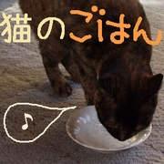 猫のごはん