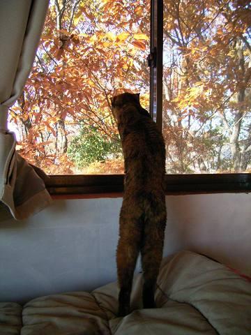 窓の外が気になるよ