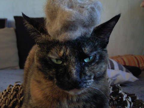自毛の帽子、似合うかしら