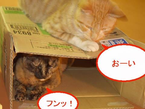 2階建て猫2