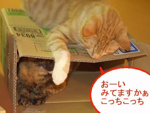 2階建て猫4