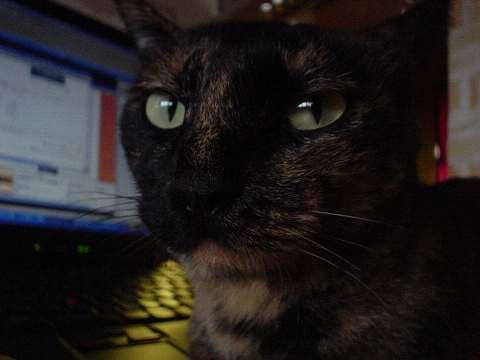 パソコンお手伝い