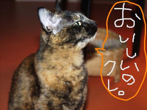おいしい猫缶探求中。