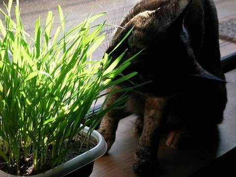 草を食べるよ