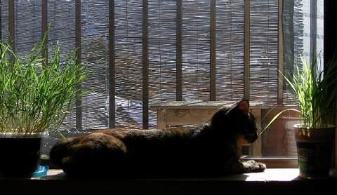 窓際にて。