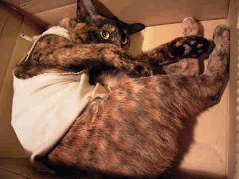 届いたばかりの猫缶の箱にて。