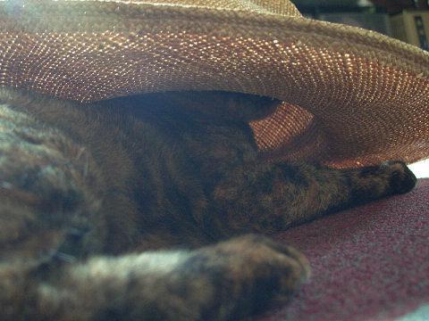 作業員の帽子
