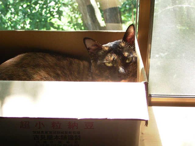 午後は、箱。