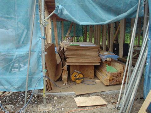 新しい材木は禁断のヨロコビ
