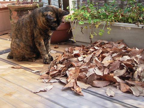 落ち葉の中にウゴメク・・・