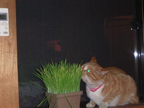 草が食いたい