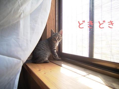 窓辺に移動