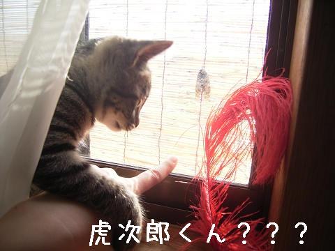 コジロウや〜いっ