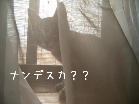 お客さんデスヨ〜