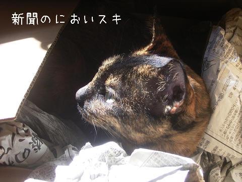 カワイイデスヨ