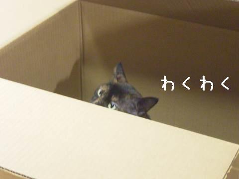 いいねー。箱。