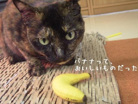 バナナが猫にオイシイなんて知らなかったヨ