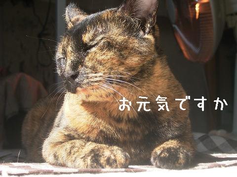 おげんこ〜