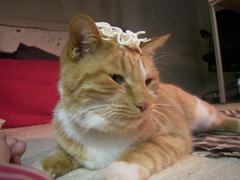 しろいヒモの冠