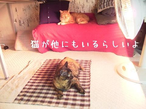 猫の声がする。