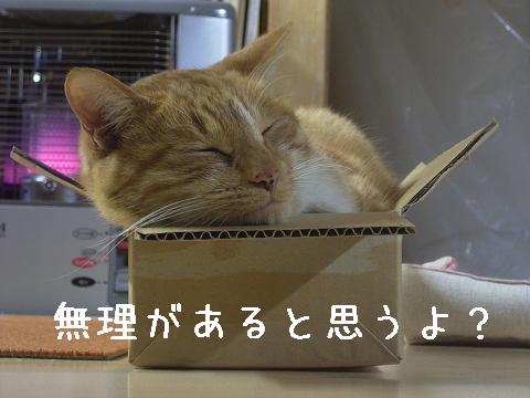 箱はけっこう丈夫ナリ
