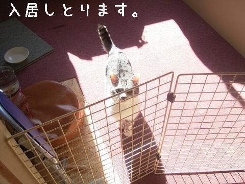 入居っ^o^/