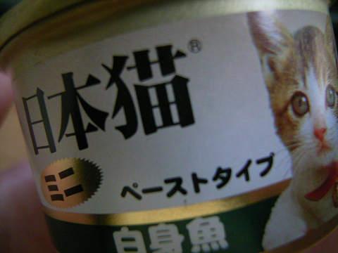日本猫白身